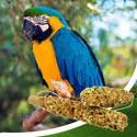 Duża papuga
