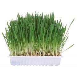 Trawa dla gryzoni w pojemniku 100gr