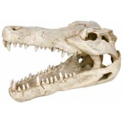 Dekoracja czaszka krokodyla duża 14cm