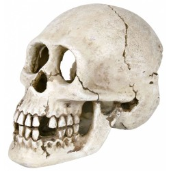 Dekoracja czaszka 15cm