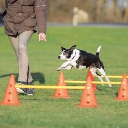 Tor przeszkód dla psa Dog Activity, zestaw