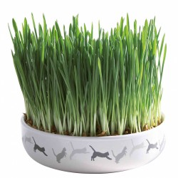 Miska ceramiczna 15x4cm na trawę dla kota