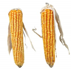 Kolby kukurydzy, 2szt/250 g